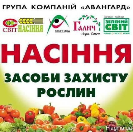 Нюнемс (Nunhems). Семена овощных, компании