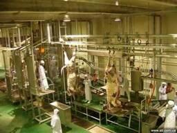 Оборудование для убоя и разделки свиней и КРС