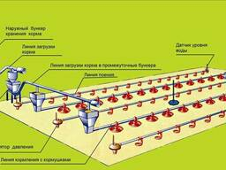 Оборудование для напольного выращивания бройлеров