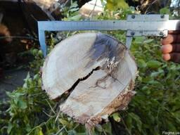 Предоставляем услугу механической обрезке деревьев лесополос