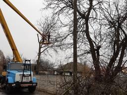 Обрезка деревьев Киев. Спил деревьев Киев
