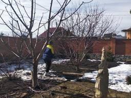 Обрезка деревьев, спил, в Кропивницком и области