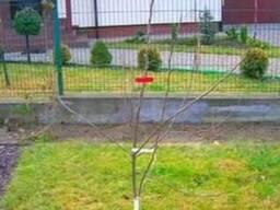 Обрезка фруктовых деревьев Киев