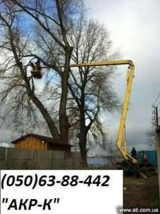 Обрезка старых деревьев киев