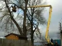 Обрезка старых деревьев киев - фото 1