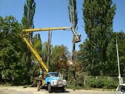 Обрезка веток Киев. Кронирование деревьев Киев. Спил дерева