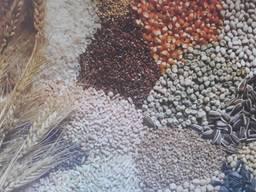 Обробка зерна