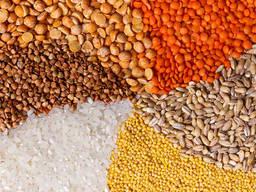 Очистка и сортировка зерна, семян, круп с помощью фотосепаратора