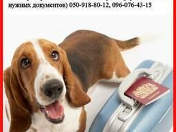 Оформление ветеринарных и разрешительных документов для ваше