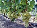 Охрана полей, садов, виноградников - фото 2