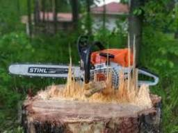 Оказываем услуги по спилу деревьев.