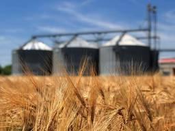 Оказываем услуги по жд перевозке зерновых по всей Украине