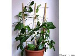 Опори для рослин купити