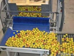 Опрокидыватель контейнеров для яблок