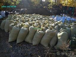 Перегной Удобрение для огорода Киев Перегной купить Киев