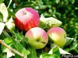 Органическое удобрение- полуфабрикат костный(костная мука) - фото 3