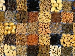 Органічний соняшник, пшениця, кукурудза
