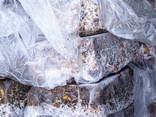 Продукция переработки Рапаны - фото 4