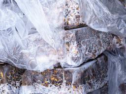 Отходы кормовые от переработки Рапаны - фото 2