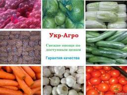 Овощи Оптом - фото 1