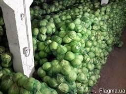 Овощи Оптом - фото 5