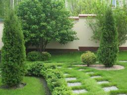 Озеленение кровли, растения и сады на крыше