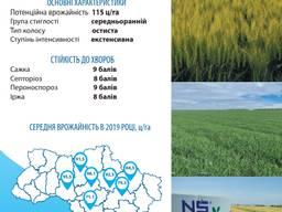 Озима пшеница НС 40 С, Сербия Украина купить цена