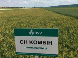 Озимая пшеница сорт Комбин СН, 1 репр. DSV.