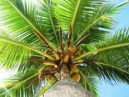 Пальмовое масло, водорастворимое