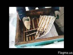 Паста Канди для подкормки пчел в зимний период