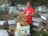 Пчелиное маточное молочко нативное , пасека Апи-Ай-Дар - фото 2