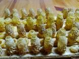 Пчелиное маточное молочко в маточниках Апи-Ай-Дар - фото 5
