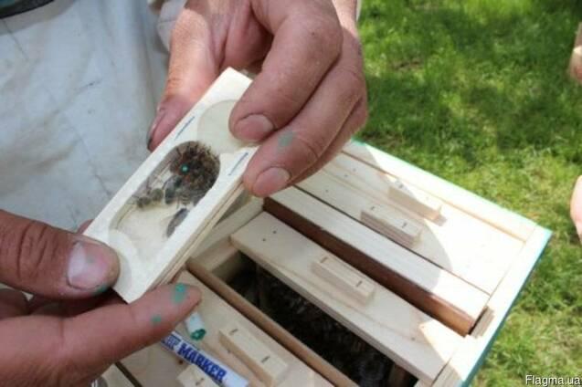 Пчеломатка, бджоломатка, матка Карпатка