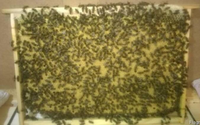Пчелопакеты карпатка 2019