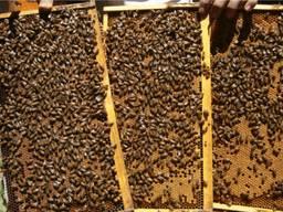 Пчелопакеты (Карпатка Карника Бакфаст) на 4 рамки Опт и Розница
