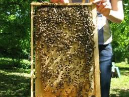 Пчелопакеты , Пчелосемьи, Карпатка-Степная май 2020
