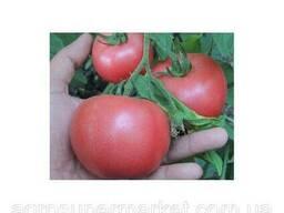 Розовый томат Пембола Детерминантный гибрид 500семян BT Tohum