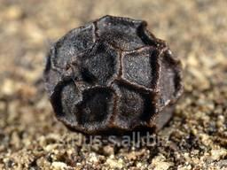 Перець чорний горошок