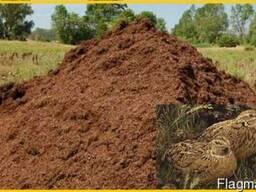 Перепелиный помет, эко - удобрение. - фото 3