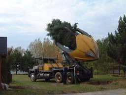 Пересадка и посадка крупных деревьев