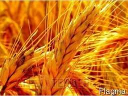 Перевалка зерновых
