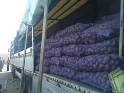 Перевезення картоплі, моркви з Волинської області по Україні
