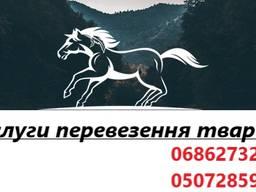 Перевозка лошадей, животних по Україні та Європі