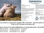 Перфектин ( Перфектін ) - экономия корма до 25% ! - фото 1