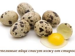 Пищевое перепелиное яйцо