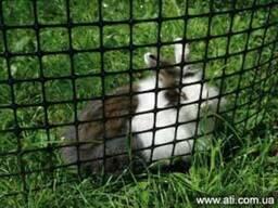 Пластиковая сетка для птичников, садовая решетка