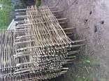 Плетень из орешника. (Украинский тин) - фото 5