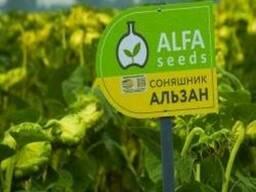 Подсолнечник Альзан, Euralis Semences (семена)