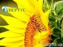 Подсолнечник Фантазия (А-Е) - Нертус