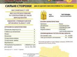 Подсолнечник Клариса КЛ Oil, Коссад Семанс, под Евролайтинг